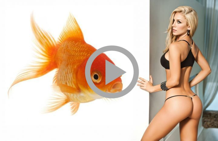 There's a little known fact about female goldfish that can actually help you get laid. It relates to pre-selection.. click the image to watch a crazy video about it!..
